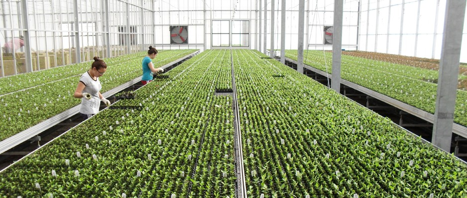 ERP BASED PRODUCTION, SMART GREENHOUSE, TRACEABLE PRODUCTS